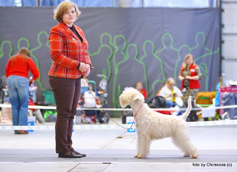 FeNoVa WinterDogShow. Day 2